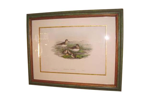 "Original John Gould Water Birds from his collection, ""The Birds of Great Britain"", circa 1862-1873 Mizz"